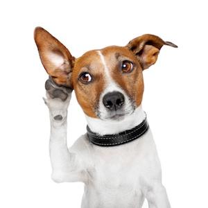 dog_listening.jpg